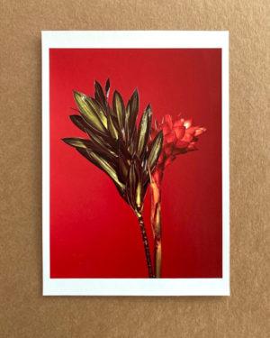 Artist Support Pledge Flower #02