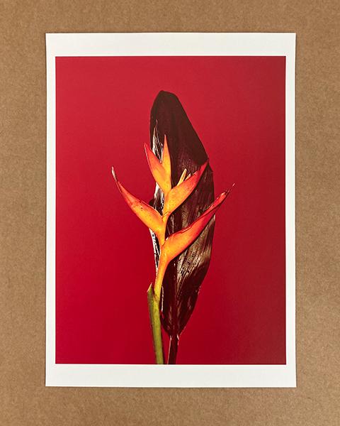 Artist Support Pledge Flower #03